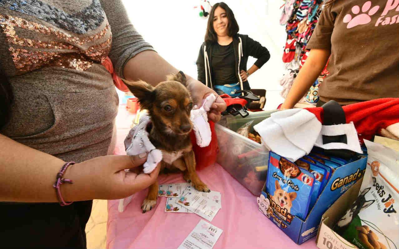 Realizan Feria de la Salud para Mascotas en Irapuato