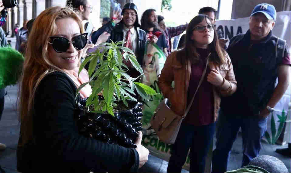 Prepara Senado legalización de la mariguana